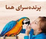 فروش انواع پرنده و حیوانات خانگی در بابل