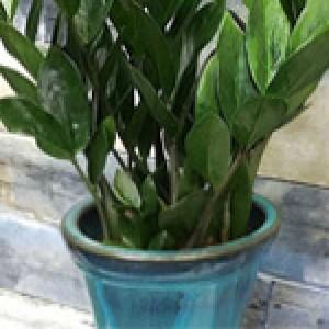 نگهداری گیاهانی که به نور کمی نیاز دارند